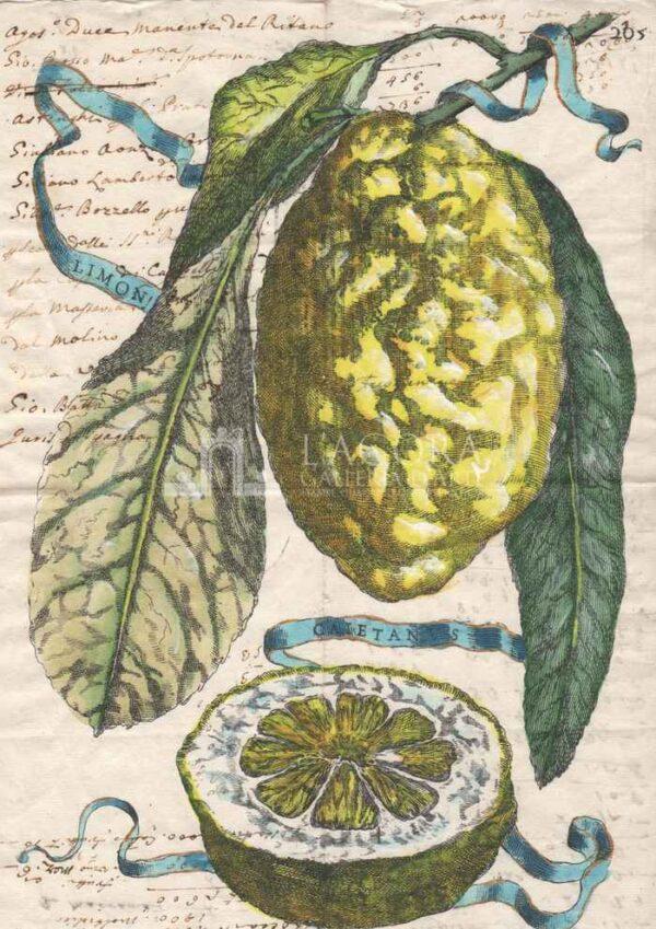 Agrumi manoscritti - Cedro