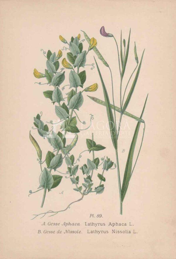 botanica cromolitografia 2