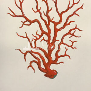 Coral on cotton paper