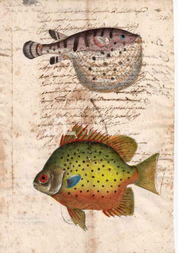 Animali marini carta manoscritta 6 (1)