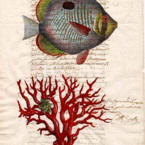 Animali marini su carta manoscritta