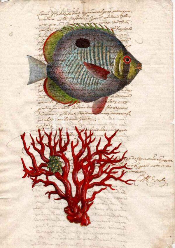 Animali marini carta manoscritta
