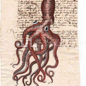 Polpo/Seppia carta manoscritta