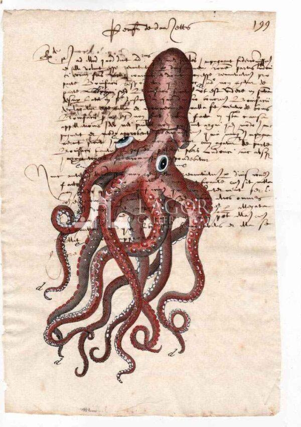 Polpo 1 carta manoscritta (1)
