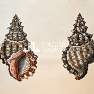 Sea shells on cotton paper