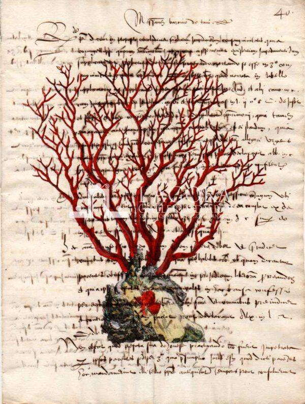 coralli rossi su carta manoscritta 1