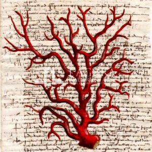 Coralli rossi su carta manoscritta