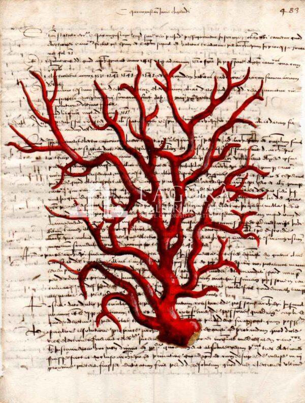 coralli rossi su carta manoscritta 3 (1)