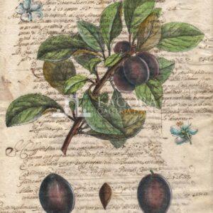 Frutta su carta manoscritta