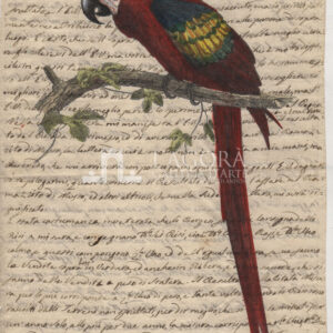 Uccelli su carta manoscritta