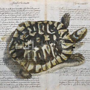 Tartarughe su carta manoscritta