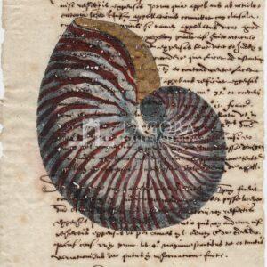 Conchiglie singole su carta manoscritta