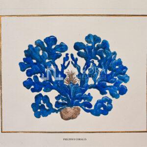 Coralli blu su carta cotone