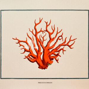 Coralli rossi su carta cotone