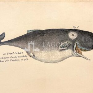 Balene su carta cotone