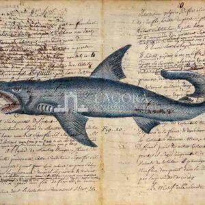 Squali su carta manoscritta